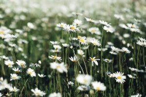 mai sommer blomster livsstil