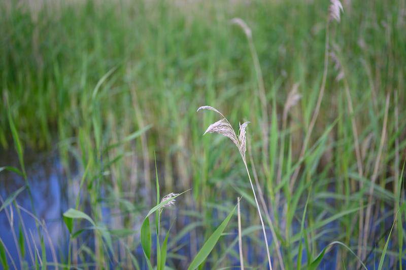 gress grønt sommer blomster